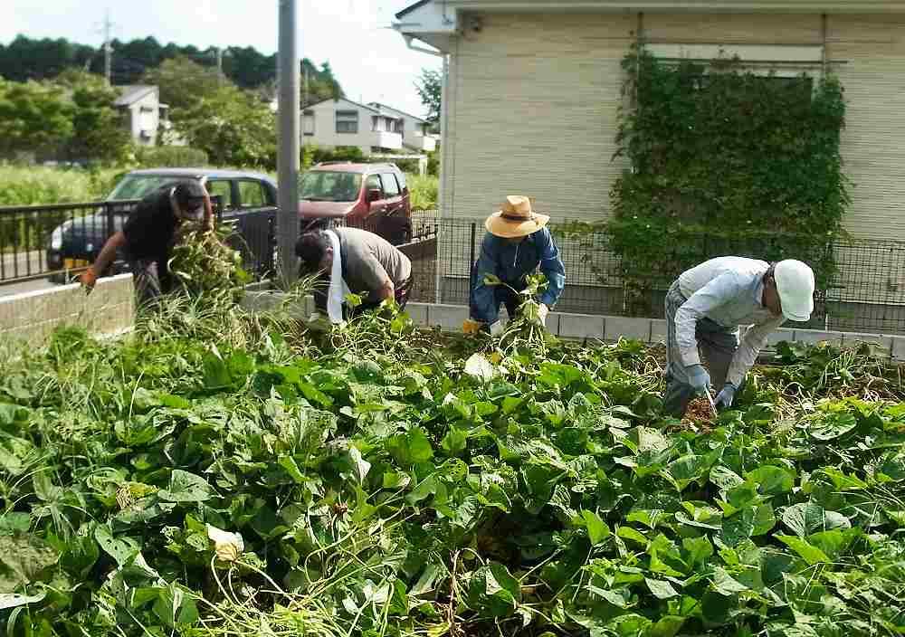 菜園教室9月写真2